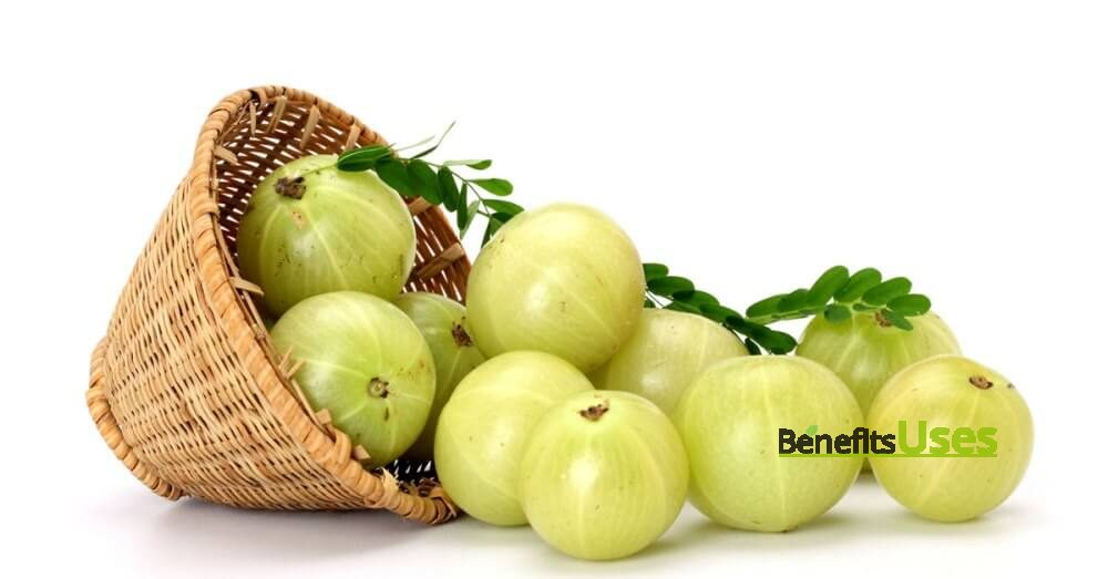 hairfall-remedy-Indian-Gooseberry